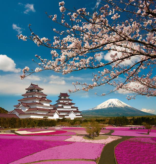 Cherry blossom.com sito di incontri